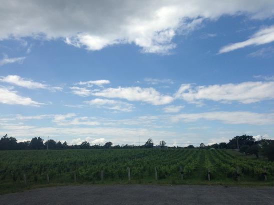 vinyard